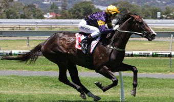 Grunt To Australian Guineas After CS Hayes Stakes Win