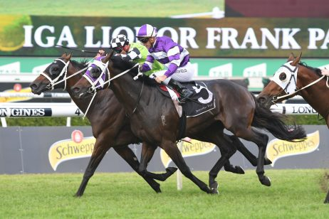 Rough Habit Winner Dark Dream onto Queensland Derby 2018