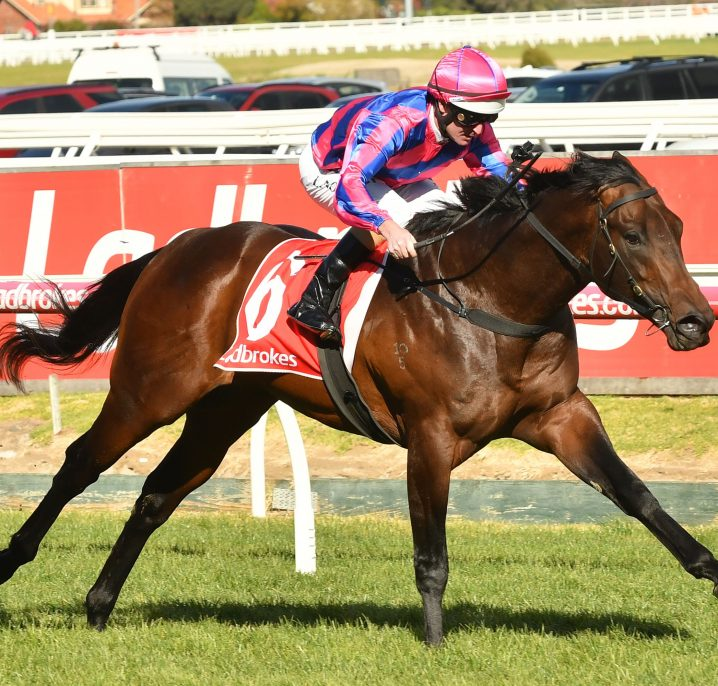 Coolmore Stud Stakes spring target for Vain Stakes winner Tony Nicconi
