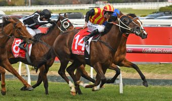 Memsie Stakes next for P.B. Lawrence Stakes winner Showtime