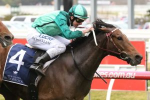 Feehan Stakes Results: Humidor For Waller into Ladbrokes Cox Plate