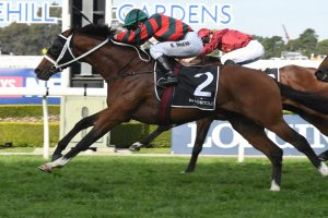 Rosehill Gardens Racecourse News The Autumn Sun Plate Still Goal Golden Eagle Plan