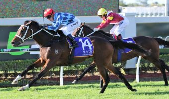 Weight & Distance No Worries for Youngstar, But Barrier Might Be