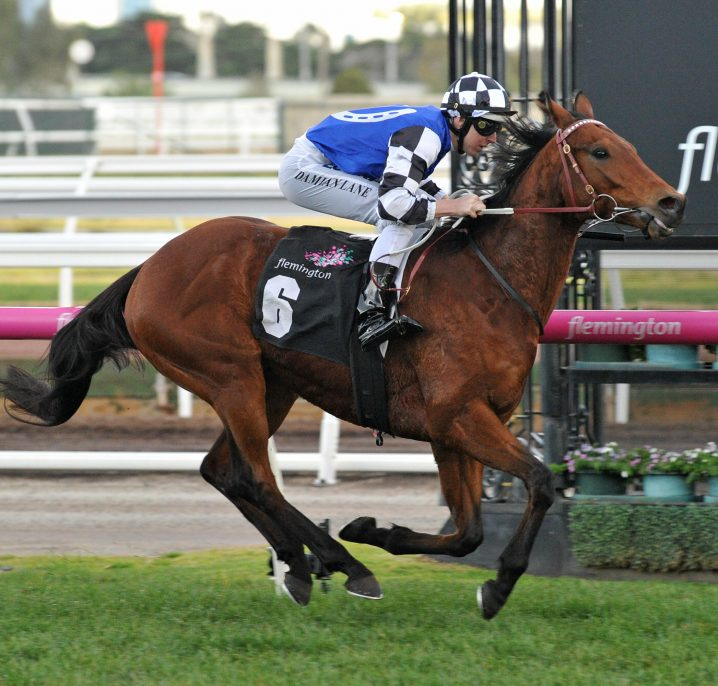 Grafton Cup 2020 Results: Top Weight Proves No Problem for Sixties Groove
