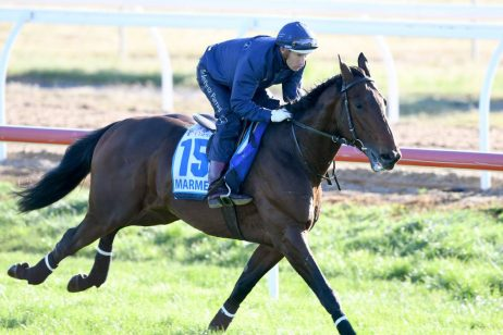 Melbourne Cup Betting: Marmelo the Early Morning Mover