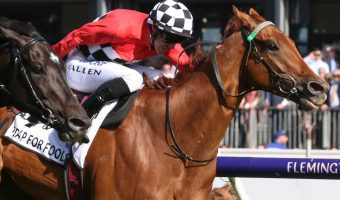 Arcadia Queen is the favourite in the 2018 Kingston Town Classic field