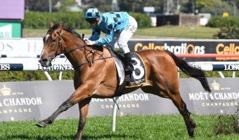 Doubt Defying has no worries on wet Villiers Stakes track
