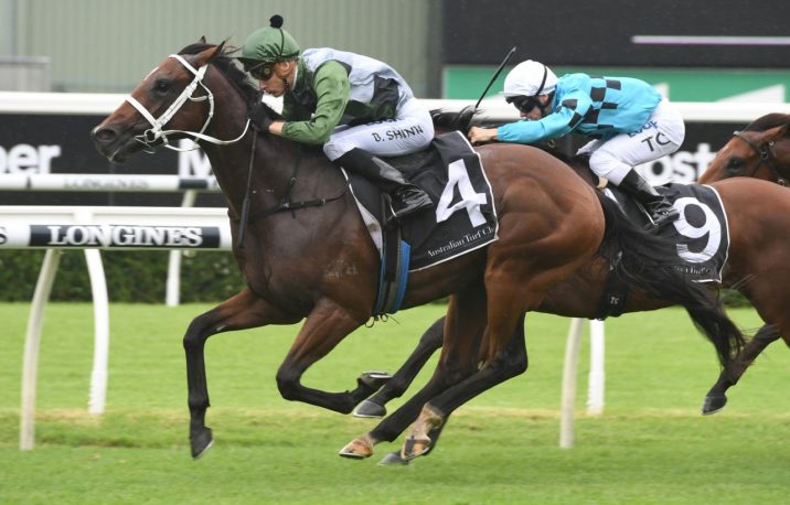 Todman Winner Yes Yes Yes Firms into Golden Slipper Favourtism