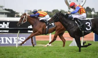 A Galaxy for the Ages: Nature Strip Claims Narrow Victory Over Pierata