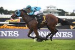 Bellevue Hill a chance to back up in 2019 Inglis Sires'