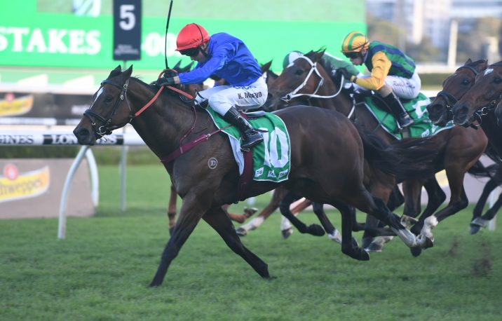 2019 Winterbottom Stakes Betting Update: Trekking Firms Drawing Barrier 4