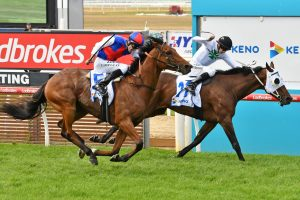 Steel Prince Cleared for Melbourne Cup 2019 Bid