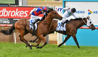 Steel Prince Toughens Up for Melbourne Cup 2019
