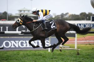 Ming Dynasty Winner Quick Thinker Firms in VRC Derby Betting