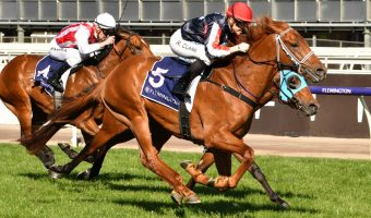 Dalasan New Caulfield Guineas Favourite After Thrilling Danehill Win