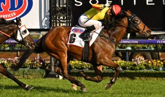 2020 Belmont Sprint Field & Betting: The Velvet King Narrow Favourite