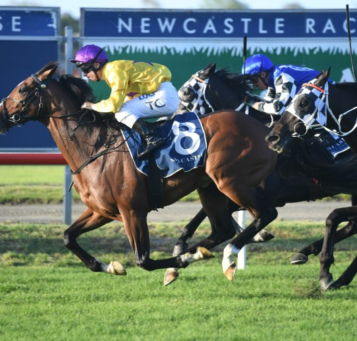Newcastle Cup Winner Hush Writer Eyes Group 1 Debut in The Metropolitan