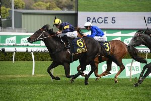 The Everest Now A Possibility for Premiere Stakes Winner Brutal