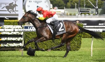 Cosmic Force To Be Reckoned With in 2020 Arrowfield 3YO Sprint Betting
