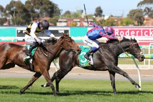 Prince Of Arran Puts Forward Melbourne Cup Claim With Bold Geelong Cup Win