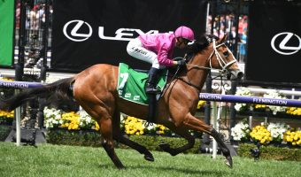 2020 Sapphire Stakes Winner Sure Knee Hands Waller a Double