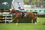 Magic Millions Classic Favourite Blondeau Heads 2019 BJ McLachlan Stakes Odds