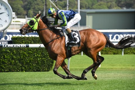 January Cup 2020 Betting Update: Luvaluva Firming Favourite