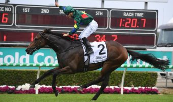 Alligator Blood Shoots to Top of 2020 Australian Guineas Odds