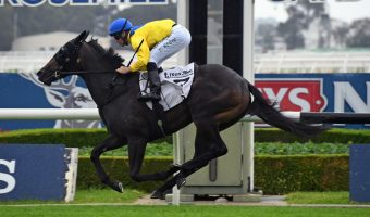 Cellsabeel Odds-On in Silver Slipper Stakes 2020 Betting