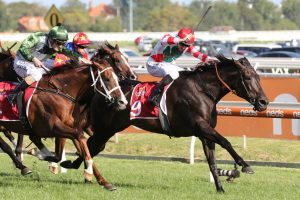 2020 Peter Young Stakes Results: Australian Cup Next for Miss Siska