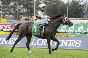 Tulloch Stakes Winner Quick Thinker a Quick Firmer in Australian Derby Market