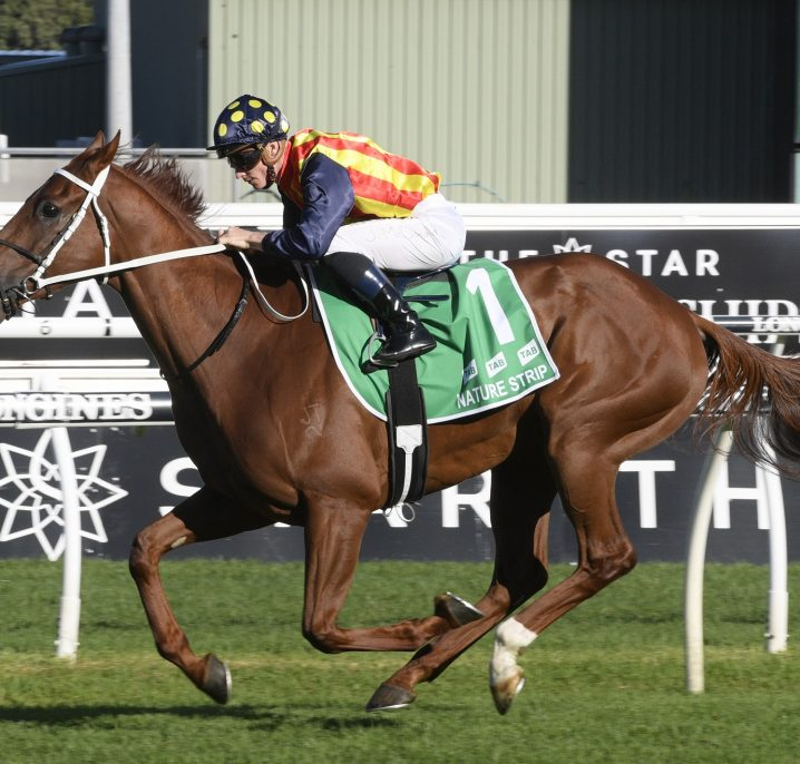 2020 The Everest Favourite Nature Strip Flies in Trial