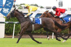 Cramming (Photo: Daniel Costello). Races.com.au