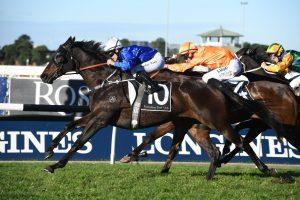 Gaulois (Photo: Steve Hart) - Races.com.au