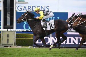 Frankely Awesome (Photo: Steve Hart) - Races.com.au