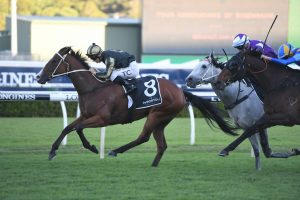 Snitz (Photo: Steve Hart) - Races.com.au