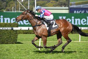 Man Of Peace Horse Form (Photo: Steve Hart) - Races.com.au