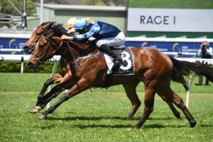 See You Soon Horse Form (Photo: Steve Hart) | Races.com.au