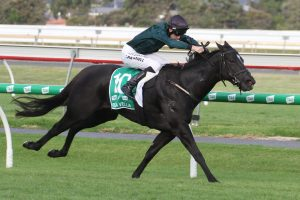 Bella Vella Horse Form (Photo: Jenny Barnes) | Races.com.au