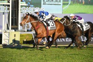 Mugatoo Horse Form (Photo: Steve Hart)   Races.com.au