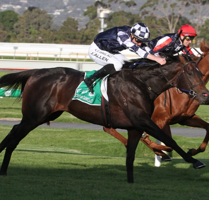 2020 Underwood Stakes Winner: Russian Camelot Claims Second Group 1 on His Way to the Cox Plate