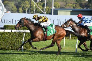 Probabeel Horse Form (Photo: Steve Hart) | Races.com.au