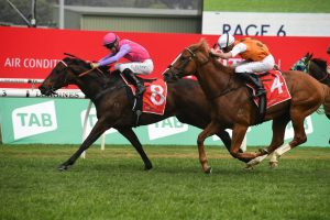 Trumbull Horse Form (Photo: Steve Hart) | Races.com.au