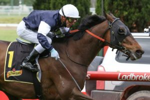Homesman Horse Form (Photo: Ultimate Racing Photos) | Races.com.au