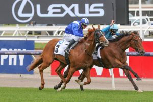 Crosshaven Horse Form (Photo: Ultimate Racing Photos) | Races.com.au