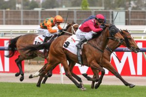 Victoria Quay Horse Form (Photo: Ultimate Racing Photos) | Races.com.au