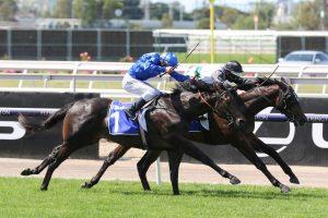 Finance Tycoon Horse Form (Photo: Ultimate Racing Photos) - Races.com.au