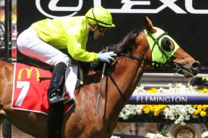 Sin To Win Horse Form (Photo: Ultimate Racing Photos) | Races.com.au
