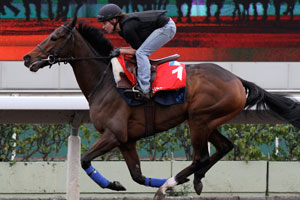 Cirrus Des Aigles on target for Hong Kong Cup