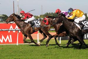 Laser Hawk on target for Australian Derby